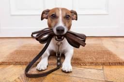 Passeador de cães (Dog Walker)