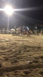 Vendo cavalo de vaquejada qm (Direita )