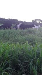 Vendo uma fazenda na estrada novo airao