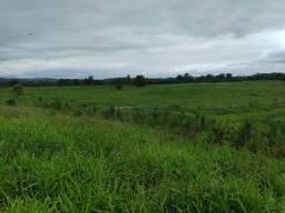 Fazenda 380 Alqueires, 200 mil Pés  Palmito Pupunha (Willian Ricardo)