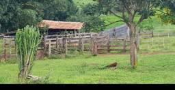 Adquire terras ou gado parcelado