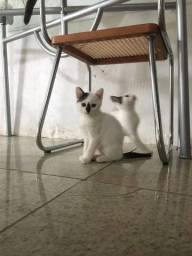 Gatinhas brancas