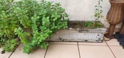 6 Vasos de planta