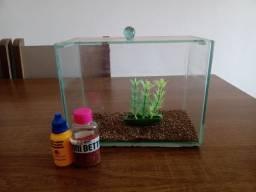 Título do anúncio: Mini aquário de 3 litros (brinde ração e anti cloro)