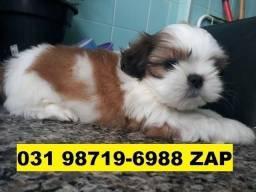 Canil Filhotes Cães Lindos BH Shihtzu Maltês Poodle Basset Lhasa Pug Yorkshire