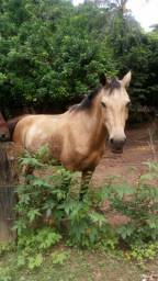 Cavalo bom para carroça gado e manso pra criança