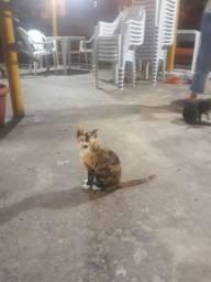 Adoção de gato!