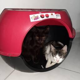 Casa Para Gato e Cachorro Modelo Toca de Gato Ultimas Unidades