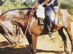Título do anúncio: Vendo cavalo de marcha 9 anos porte grande