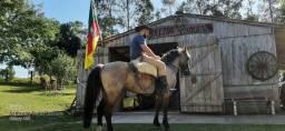 Cavalo Crioulo Lubuno