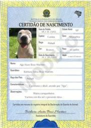 Certidão de nascimento pet