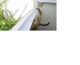 Título do anúncio: Kit Roller Cat - 3 metros