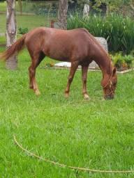Égua charrete