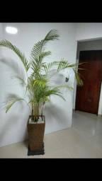Vaso de luxo com palmeira natural 2 metros de altura