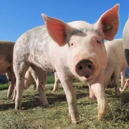 Título do anúncio: Doasse Porco