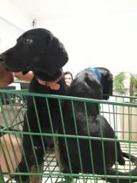 Vende-se cachorro