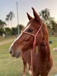Cavalo de 4 anos