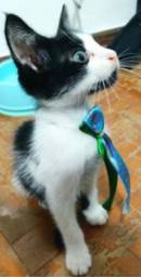 Título do anúncio: Adoção Gato