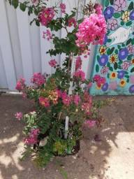 Fertilizantes para plantação ou flores