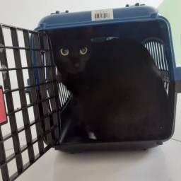 Exclusivo Caixa De Transporte Para Gatos