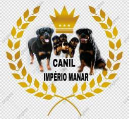 Rottweiler com pedigree cbkc(reservas abertas para as próximas ninhadas)