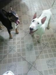 Bill terrier