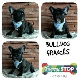 Filhote Microchipado - Bulldog Francês Macho - Parcelamos em até 12X