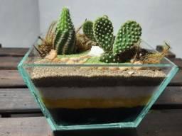 Terrário de vidro com cactos naturais