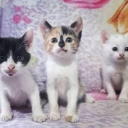 Doando gatinhos