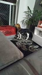 Toddy: O Beagle