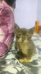 Doação de 1 gatinho macho
