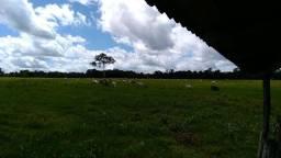 Fazenda no alto acara