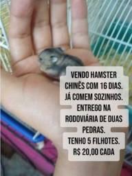 Título do anúncio: Hamster Chinês Filhotes