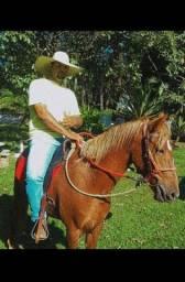 Vendo egua recém repassada na doma 3 anos de idade
