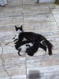 Doação de gatinhos machos!
