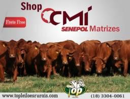 Lote 17 - Shop CMI Senepol
