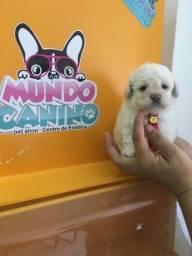 Poodle toy ( minúsculo)