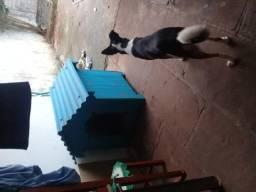 Casinha para cães