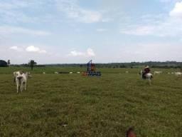 Sítio à venda, por R$ 2.775.000 - Zona Rural - Teixeirópolis/RO