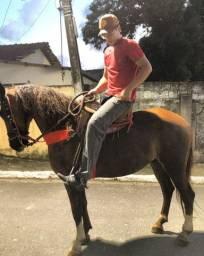 Vendo Excelente Cavalo