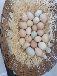 Vendi Ovos Caipira