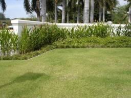 Gramas Jardim