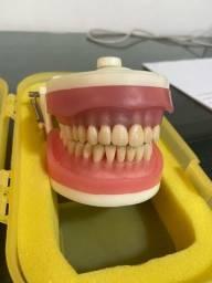 Manequim Odontológico Nunca Usado