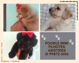 Poodle mini toy em promoção