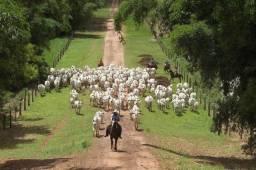 21 Crédito Rural Paraná
