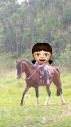 Cavalo bem domado bom no laço Ac troca