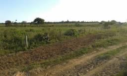 1.500 hectares, com 1.100 aberto 160 km de Matupá