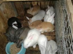 Filhote de coelhos