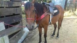 Vendo egua linda 2.000 zap(071-98757-4961