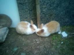 3 coelhos